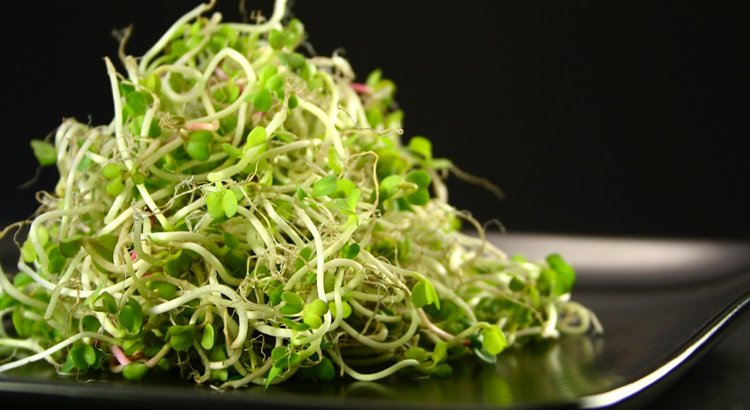 Sprouts can stave off hunger and cravings